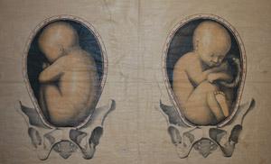 VENIRE ALLA LUCE dal concepimento al parto